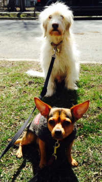 Alfie & The Dude enjoying the warm spring sun!