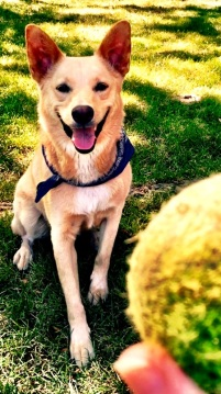 Costanza loves playin' ball almost as much as he LOVES Ready, Set, PAWS!