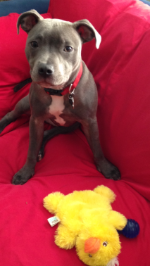 Rufio and his favorite stuffed duckie!
