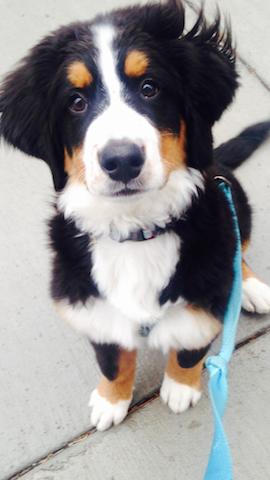 Wynnie on our first walk together!