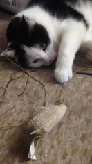 It's love/hate between Gomer and his mouse. :)