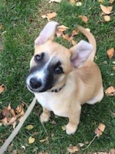 Meet everyones best friend, Gwen! :)